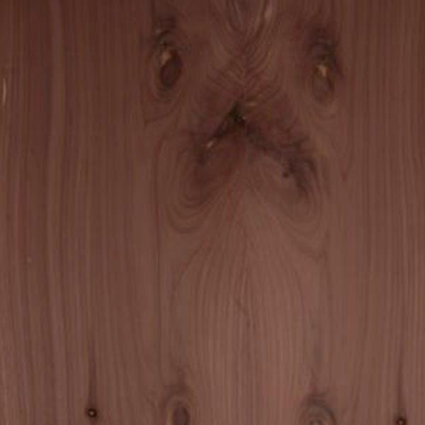 Strata Forest - Western Red Cedar